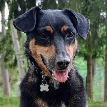 CBD für Hund bei Verdauungsproblemen