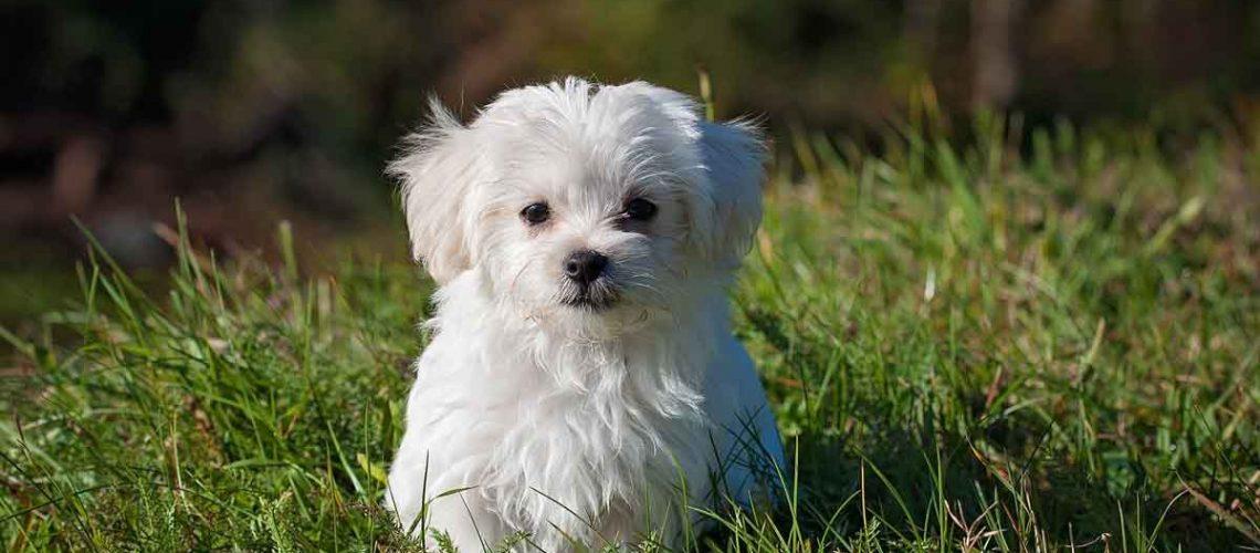 Hunden helfen CBD Tropfen